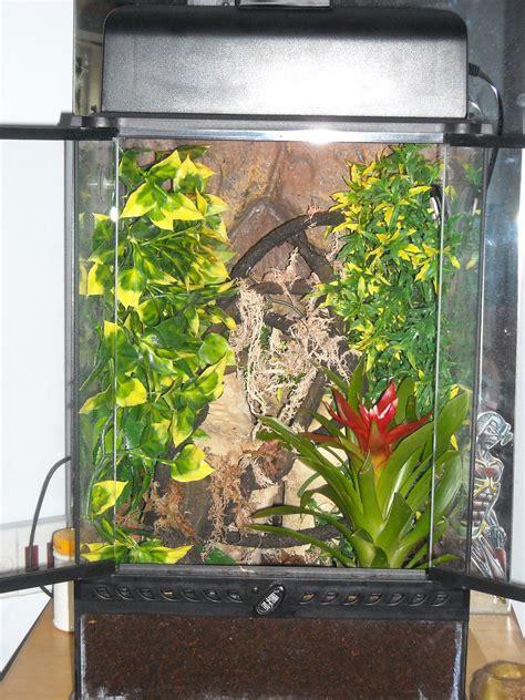 crested gecko vivarium build