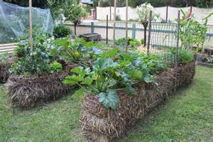 Gardening With Hay Bales Guest Post Straw Bale Gardening By Tracey Sidwell From