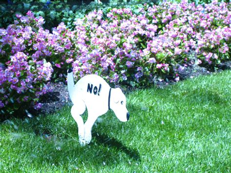 dog poops in house after going outside dog poop composting yes or no a topic revisited