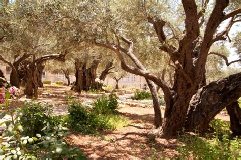 garten gethsemane israel begegnungen mit dem heiligen land b t touristik