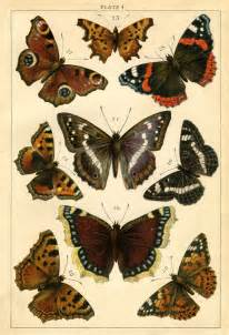 antique butterfly instant printable antique butterflies and moths