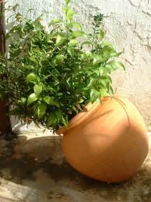 Pots For Plants How To Restore Waterlogged Pot Plants The Micro Gardener