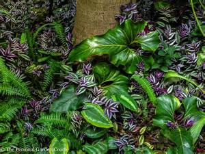 outdoor foliage plants tropical foliage