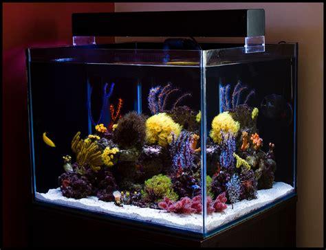 Aquarium Fish Model Cumi 13 Liter l aquariophilie r 233 cifale un luxe 224 notre port 233 e animogen