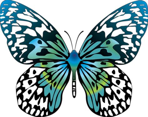 Images Of Cartoon Butterflies Clipart Best Images Of Animated Butterflies
