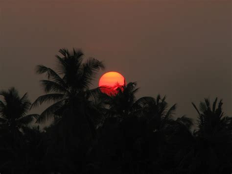 Stealing The Trees coconut trees stealing the sun by aashiks on deviantart