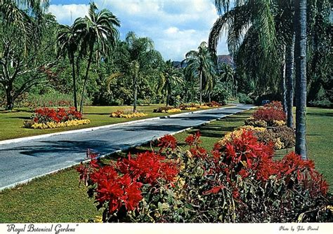 botanical gardens in jamaica royal botanical gardens at flickr photo