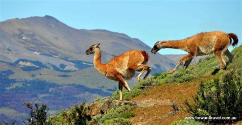 torres del paine tour by boat patagonia chile tour - Torres Del Paine Boat Tour