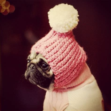 pug winter hat pug in a hat things that make me laugh the winter the o jays and