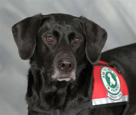 therapy peoria il pin by kosner on paws giving independence