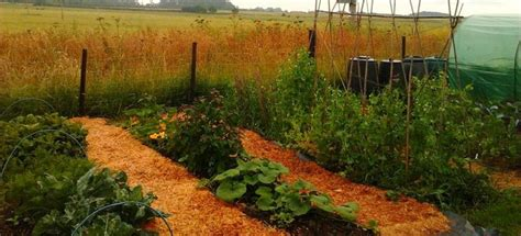 permaculture community revitalization and sustainable 52 best permaculture images on pinterest potager garden