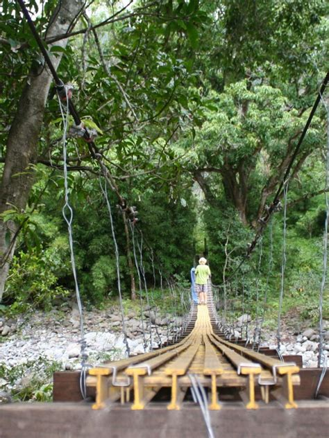 maui swinging bridges articles maui guidebook
