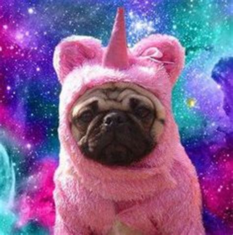 pug in unicorn costume unicorns other magical creatures on unicorns galaxy ca