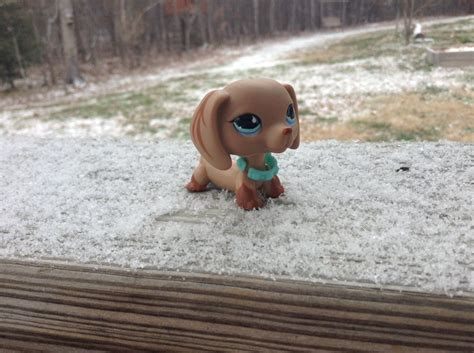 Pet Rock Snowy my lps pet pepper she is one of my favorites i just lps pets in the snow it looks awesome