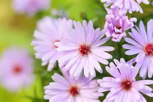 des plantes 224 floraison longue pour un jardin fleuri