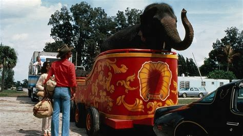 filme schauen smokey and the bandit watch smokey and the bandit ii movies online streaming