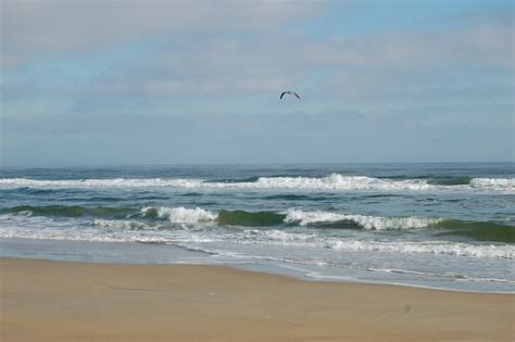 at shore edupic coastal biomes and habitats