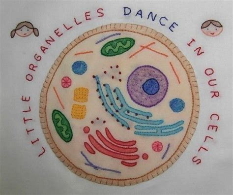 pattern of cell theory 405 best images about cells and hidden worlds of the