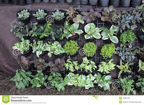 garten zu verkaufen garden plants for sale stock photo image 43086195