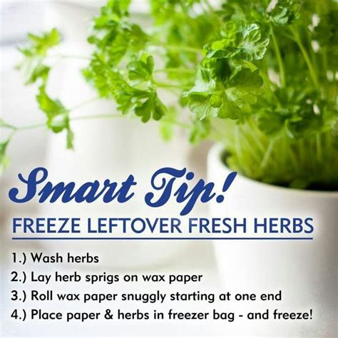 29 best images about herbs on pinterest gardens