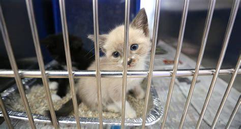 orlando shelter shelter for kittens cats kittens