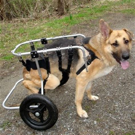 handicap dogs we cater to special needs fur dogs chicago and shore s finest cat