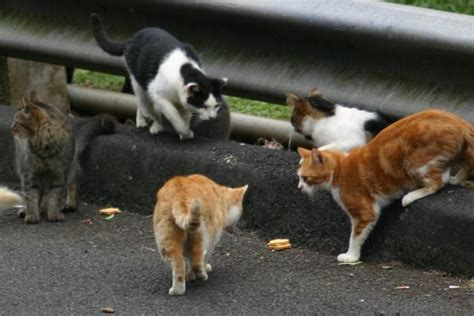 keep cats in backyard keep stray cats out of your yard with these tips cats