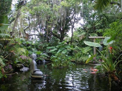 Sarasota Botanical Gardens by Serene Pond Picture Of Selby Botanical Gardens