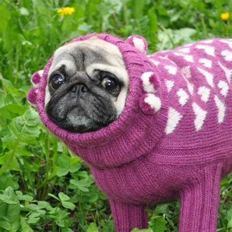 pug clothes for sweater knit sweater sweater for pug clothing for pug coat pug sweater