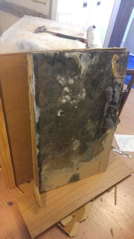 water leak under cabinets mold solutions by cowleys photo album water leak under
