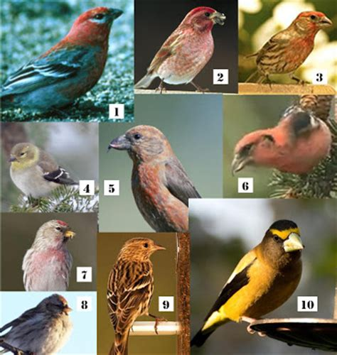 wild birds unlimited 10 winter finches in michigan