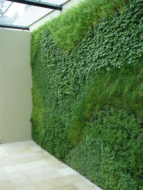 herbs on wall a green wall planted with easy to grow herbs sticks and