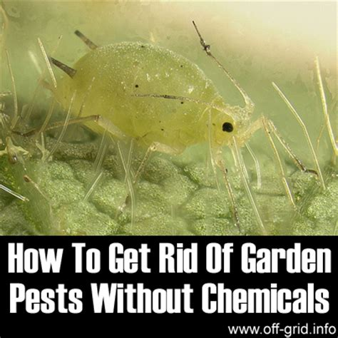 how to get rid of garden pests without chemicals off grid