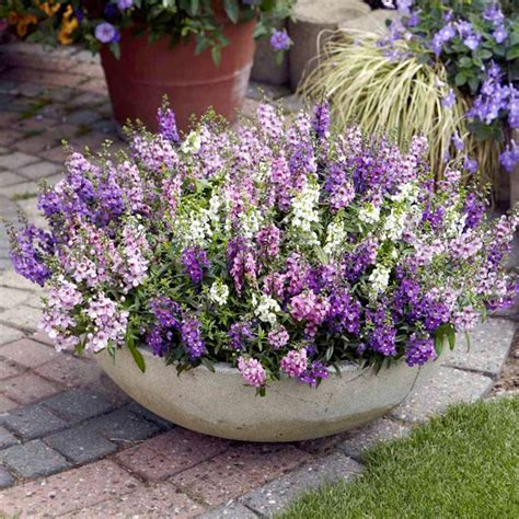 best flowers for small pots 17 best ideas about flowering plants on pinterest shade