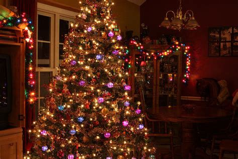 tree purple and gold gold and purple lit tree pictures photos and