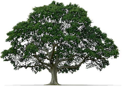 imagenes png arboles ahorrar energ 237 a mediante los 225 rboles educaci 243 n urgente