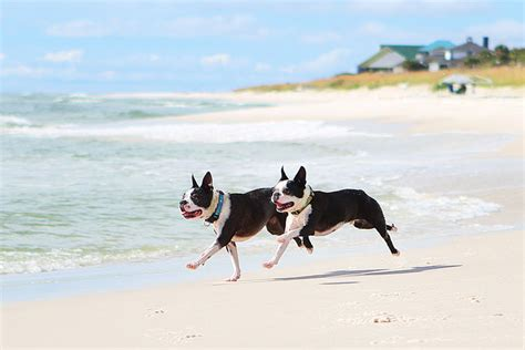 florida beaches that allow dogs pet friendly leash vacation cape san blas florida panhandle 1 kevin