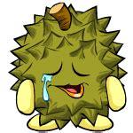 Bibit Durian Musang King Jombang gambar direktori gambar durian animasi di
