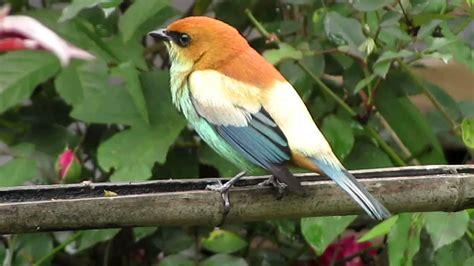 imagenes de aves asombrosas aves desde el jard 205 n youtube