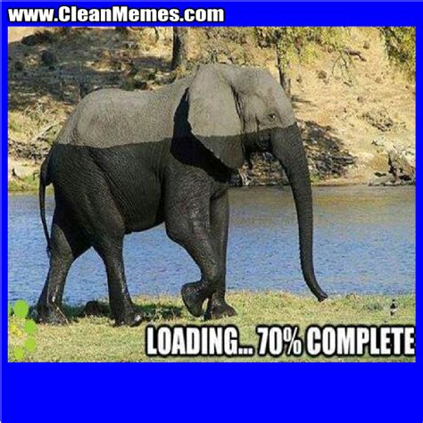 Elephant Meme - elephant meme