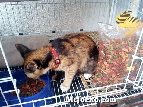 Suplemen Untuk Kucing makanan terbaik untuk kucing kesayangan anda