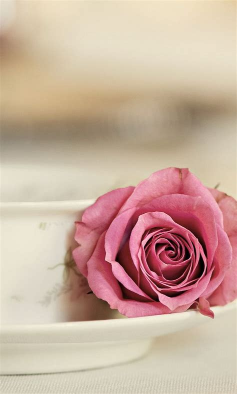 elegant rose  happy valentines day flowers wallpapers