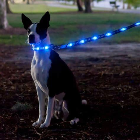 led leash led light up leash shut up and take my money