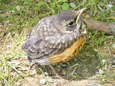 rescued birds ohio what to do if you find baby wildlife the national wildlife federation
