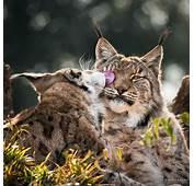 Cute Cats Wild Animals Photos By Marina Cano On Inspirationde