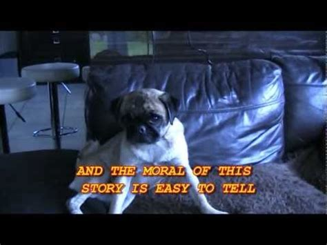 the pug that can t run 17 best images about best on southern and sad cat