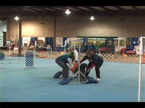 bad agility show fail crufts pooch has an in the arena doovi