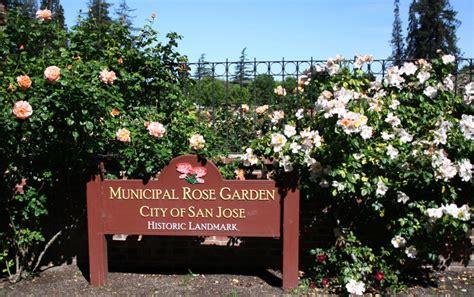photo journal san jose municipal rose garden