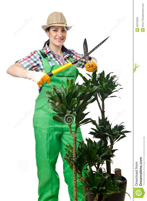Gardeners Of by Gardener Trimming Plans Stock Photo Image 26373500