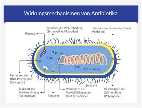 wann wirkt antibiotika bei lungenentzündung behandlungsm 246 glichkeiten bei chlamydien euroclinix